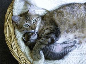 maman-chat-et-son-petit.png