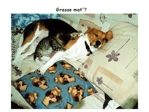 chien-chat.png