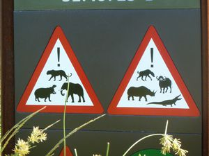 Attention aux animaux