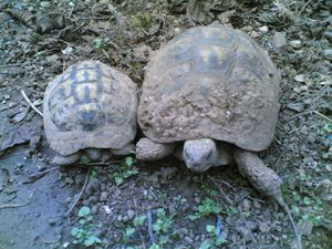 Les tortues au printemps