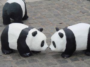 Pandas à Orléans 007