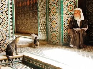 fes-morocco-maroc-old-man-with-cats-veil-homme-ave-copie-1.jpg