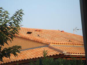 Spectacle-sur-le-toit-VIII-2011DSC02098.JPG