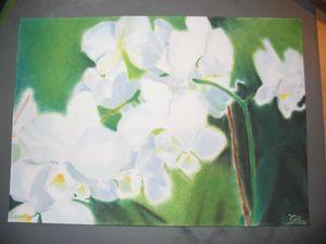 6-orchidées-2006