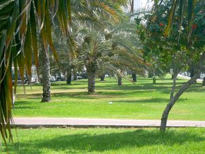 abu-dhabi-ville-verte.JPG