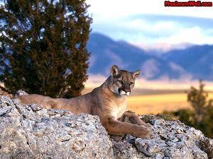 Puma10.jpg