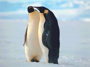 humour-fond-ecran-animaux-pingouins-014.jpg