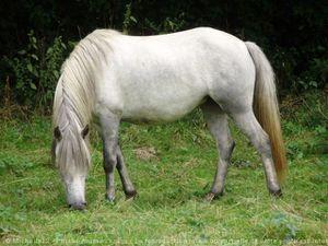 507629-animaux-chevaux-camargue.jpg