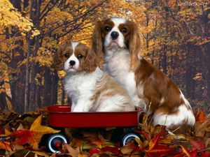 Cavalier-King-Charles-Spaniel-Mom-and-Pup.jpg