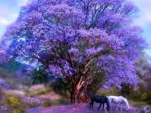 bel-arbre-violet-et-deux-chevaux.jpg