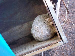 éradication d'un nid de gupes dans une remorque (-copie-1
