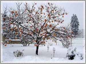 vague-de-froid-hiver-2008-2009-thomas-12-12-2008_clip_image.jpg