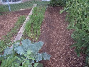 jardin 22 juillet 006