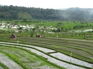 Ababi rizières 4
