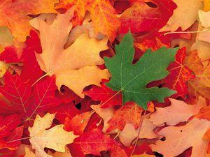 automne-12.jpg