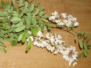 Fleur-Acacia1.JPG