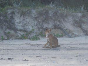 Fraser Island 9