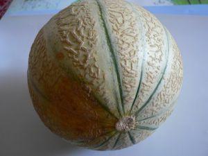 Le Melon De Coursan Ma Chienne De Vie