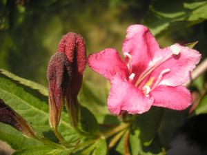 jardin-nanou30--Alvina-Nail.png