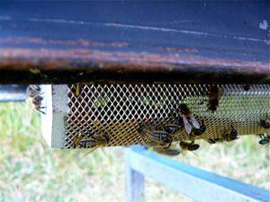 pollen-ruche-bouche-2.jpg
