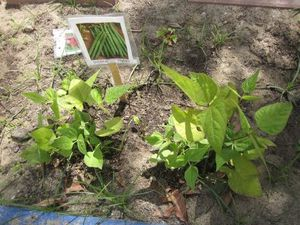 nos-plantes 8451
