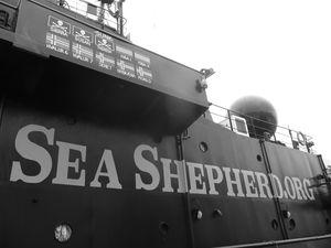 Sea Sheperd