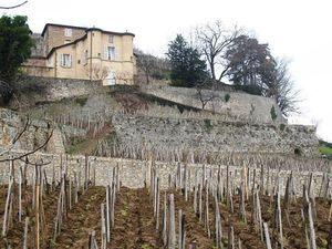 Chateau-Grillet.JPG