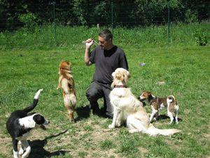 Hunde-zu-Pfingsten-2009-035.jpg
