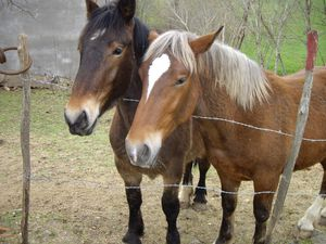 chevaux_combelle_12.JPG