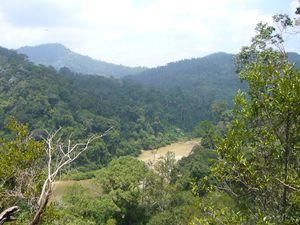 030 : Treck dans la jungle, Taman Negara