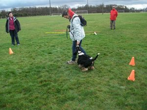 cours-collectif-canin.JPG