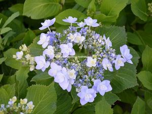 hortensia-you-and-me-forever--1-.jpg