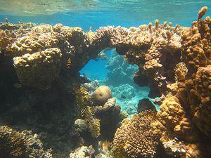 Divers 4893