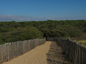 Foret littorale de chêne vert