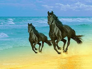 photo-cheval-noir.jpg