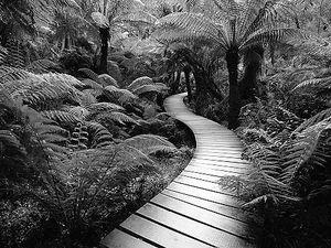 nature_trail_nb.jpg
