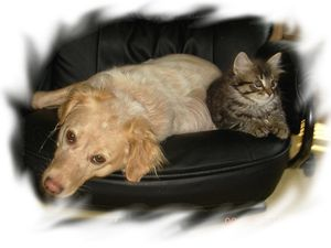 photo-3-chat-chien-a.jpg