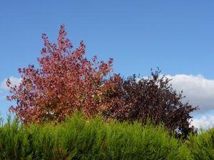 2012-09 Photo du mois 4