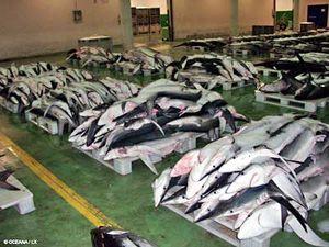 requins-morts.jpg