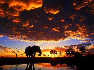 animal-elephant_00213370.jpg