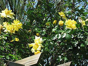 fleurs-de-jardin--10-.jpg