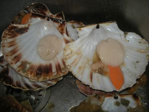 Coquilles-St-jacques---15-.JPG