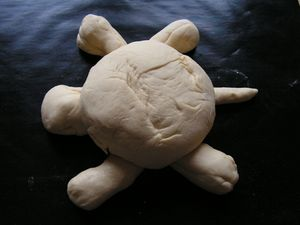 tortue (3)