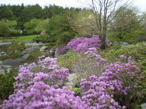 jardin botanique 15-05-11 (69)