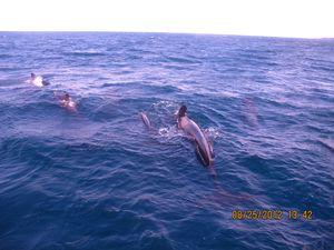 Galapagos 0662