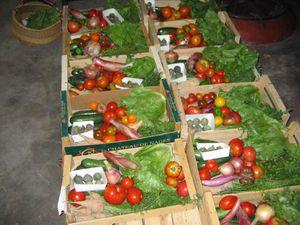 septembre amap, poules nicole, marché bio 010
