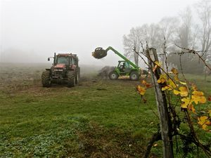 Epandage de fumier de veau pour plantation de vigne à 100 m3/ha