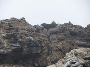 2012083080 Réserve des manchots Isla Choros