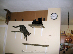 Cat-Shelves-2-480x360.png