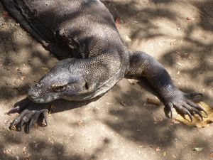 506 - crosiere parc national Komodo (18) (800x600)